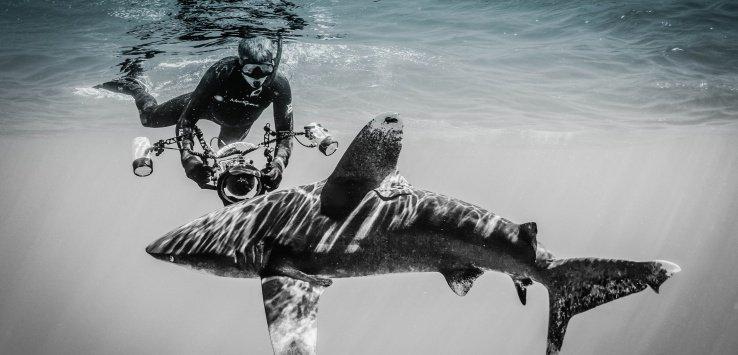 Oceanic Whitetip Shark Cat Island Bahamas Jett Britnell e1554937695579